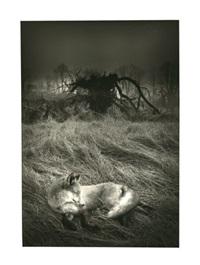 le renard dans la brume by olivier meriel