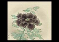 purple peony by kenji yoshioka