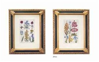 flowering plants (8 works) by john hill