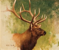 bull elk head by tucker smith