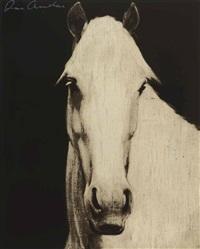 black horse head by joe andoe