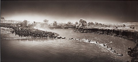 zebras crossing river masai mara by nick brandt