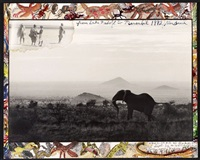 elephants memory by peter beard