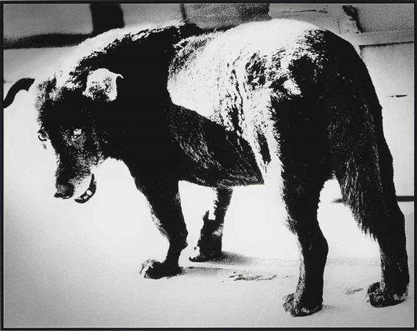 stray dog misawa by daido moriyama