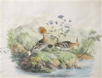 birds of india etudes ornithologiques (set of 5) by christopher webb smith