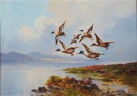 duck in flight over loch lomond by david falconer