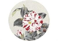 camellia by koichi nabatame