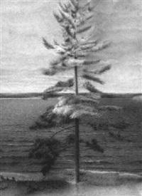 pine tree at burnegie by jeremy smith