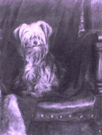 yorkshire terrier on a chair by florence jay