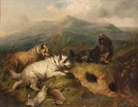 terriers rabbiting in a highland landscape by edward armfield