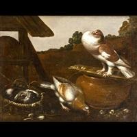 piccioni by felice boselli