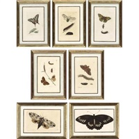 butterflies (+ 29 others; 30 works from the naturalist's miscellany) by frederick p. nodder