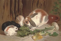 rabbits munching a turnip by arthur joseph gaskin