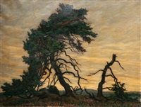 pines in backlight by karl hennemann