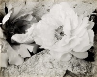 flowers by minor white