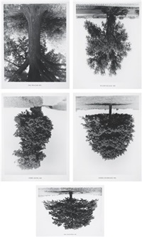 flanders trees (5 works) by rodney graham