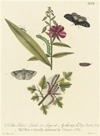 twelve studies of moths and caterpillars by eleazar albin
