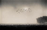 fifty five birds, wolverion, buckinghamshire, england by michael kenna