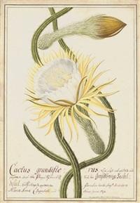 cactus grandiflorus by joseph melling