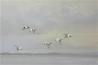 sacred ibis over water by kim donaldson