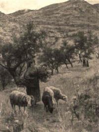 pastorella nei campi by lorenzo cecconi