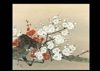 red and white plum by shiro goto