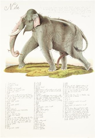 elephant by walton ford