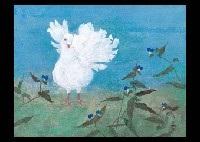 peacock by shigetomo kurashima