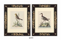 exotic birds (12 works) by anonymous (18)
