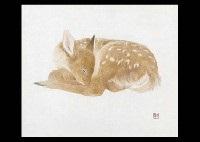 fawn by yukikazu kawamata