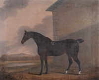 a dark bay hunter outside a stable block by clifton tomson