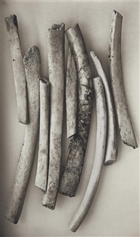 bird bones (sweden) by irving penn