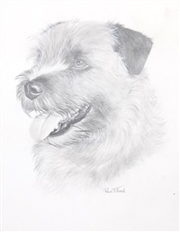 norfolk terrier by rex flood