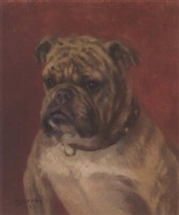 the head of a bulldog by frances c. fairman
