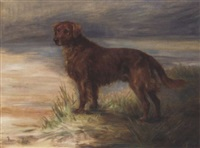 micky, a red setter in a landscape by florence jay