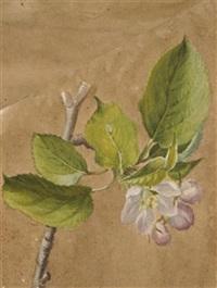 apfelblüte (+ obstblüten und primeln, lrgr; 2 works) by emile-charles labbé