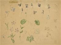 blüten und blätter (2 studies, 1 lrgr) by emile-charles labbé