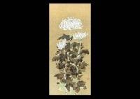 chrysanthemum by tomoki moriyama