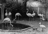 flamingos at the zoo by marinus adrianus koekkoek the younger