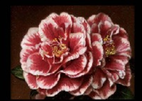 two camellias by masahiko yamanaka