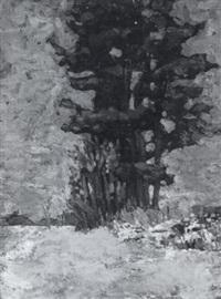 tree study by winifred m. smith