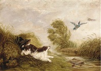 spaniels flushing out ducks by arthur batt