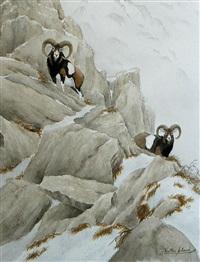 mouflon en montagne by walter arlaud