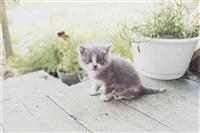 kitten, canada by juergen teller