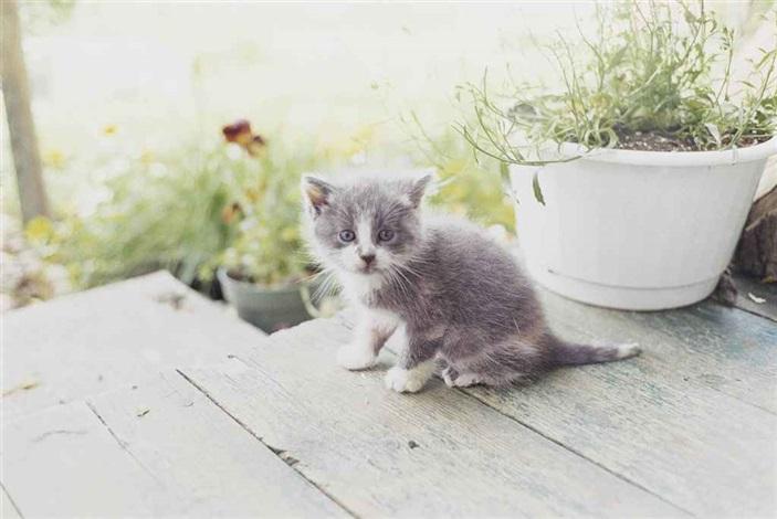 kitten canada by juergen teller