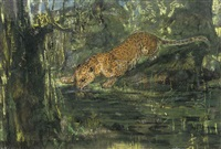 leopard drinking from a stream in the jungle by john macallan swan
