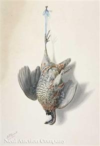 bobwhite quail by george luis viavant