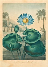 the blue egyptian water-lily by joseph constantine stadler