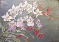 orchids by renee rops