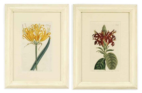 botanical lithographs set of 12 by william curtis